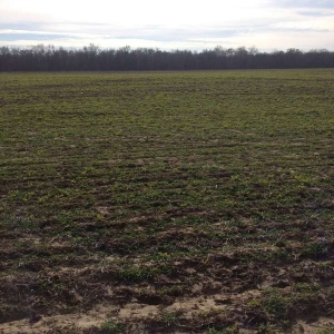 Drilled Charlotte Mix (Picture taken 1/29/15)