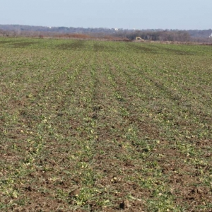 Drilled Charlotte Mix (Picture taken 1/26/15)
